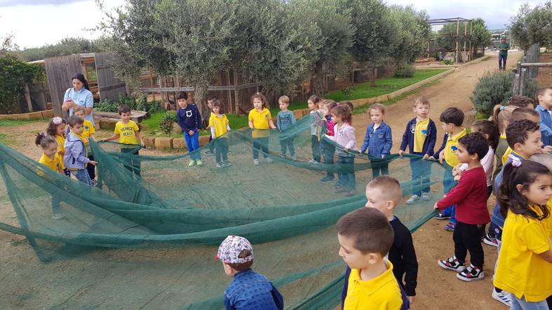 Allarghiamo le tende per le olive