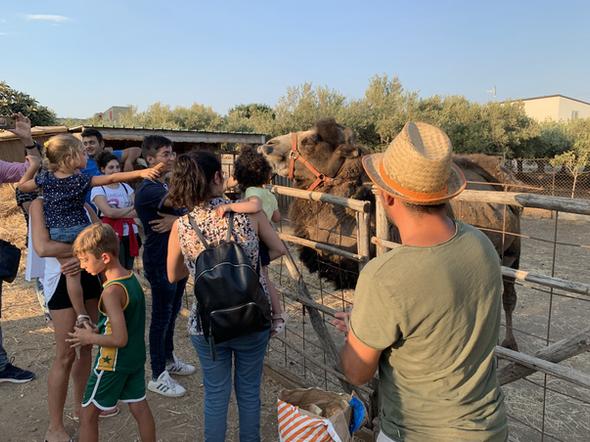 Diamo da mangiare al cammello