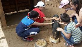 bambini accarezzano il maialino nano