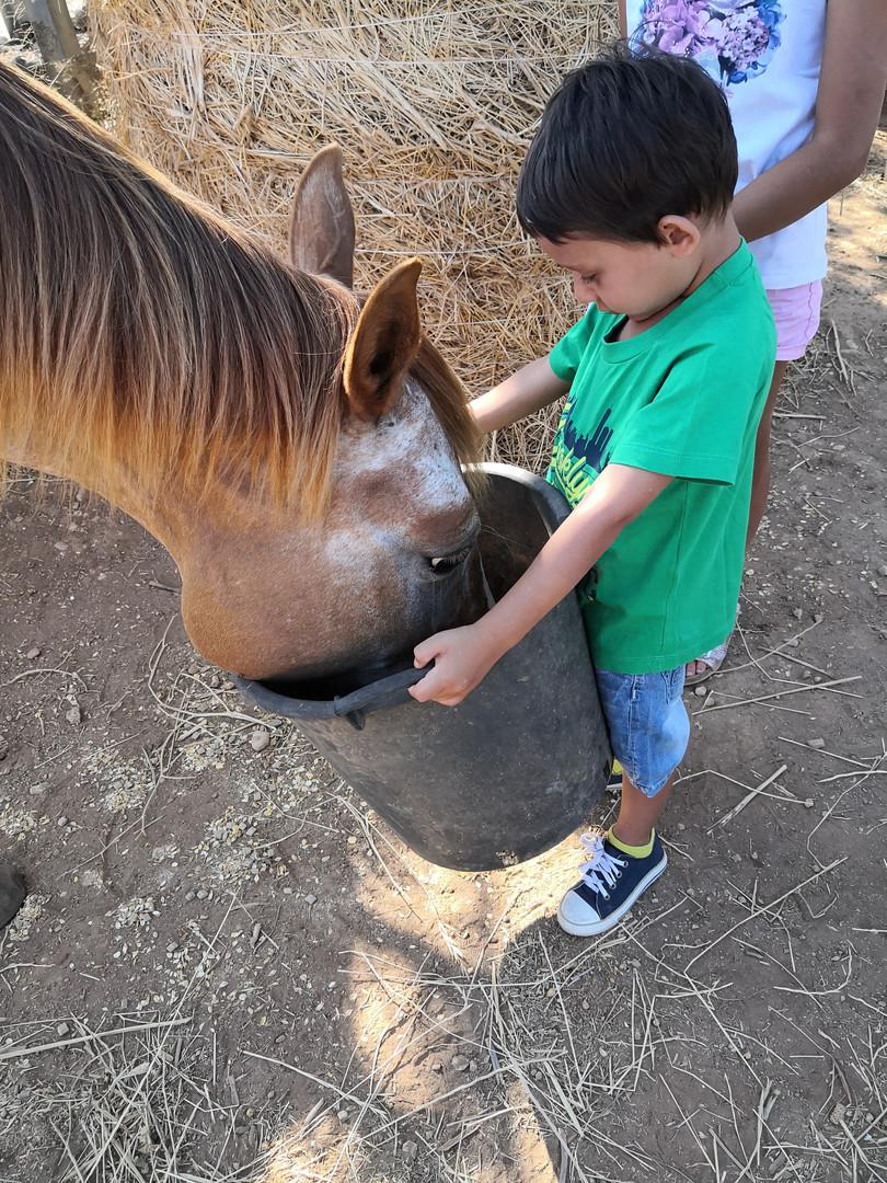 Diamo da mangiare ai cavalli