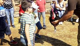 bambini alla scoperta del gallo spagnola faccia bianca