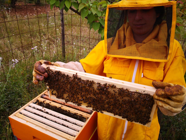 Il lavoro dell'apicoltore