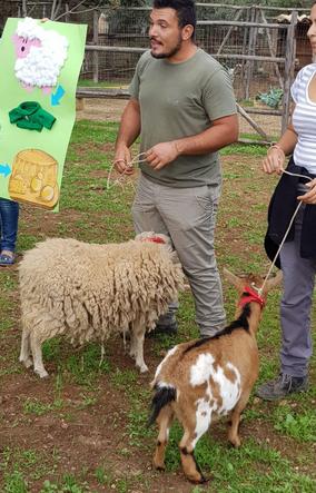 La pecora e la capra
