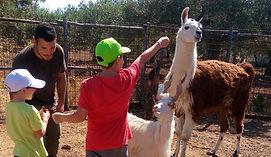 bambini col lama e la capra girgentana