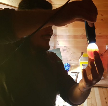 Sviluppo dell'embione nell'uovo