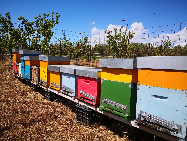 L'apiario