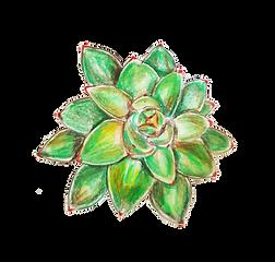 פרח.png