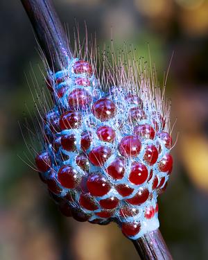 Organic Structure - 32