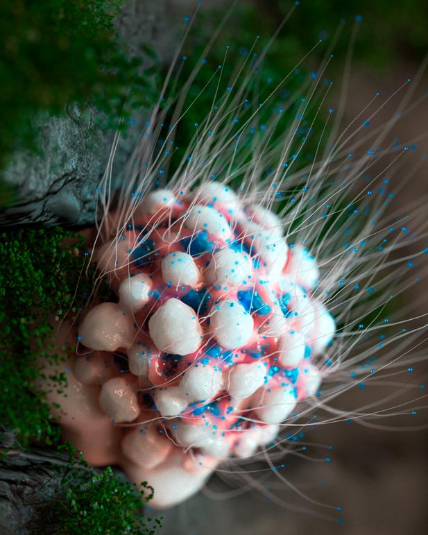 Organic Structure - 25