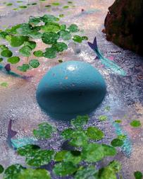Egg-09