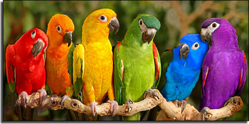ob_0c8db7_toutes-les-couleurs-de-l39arc-en-ciel