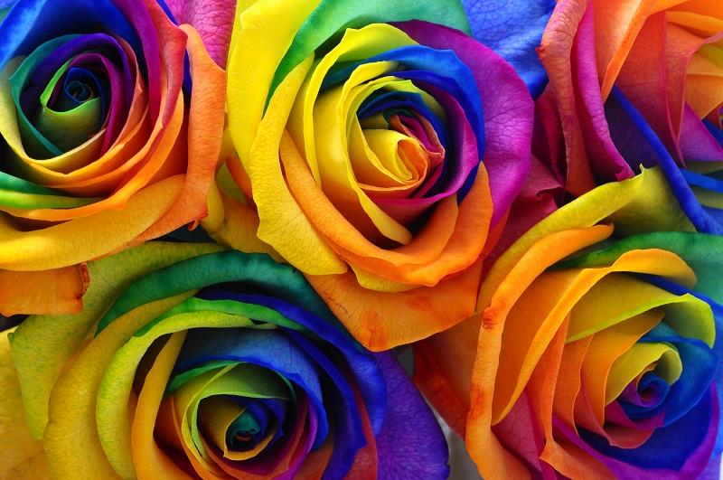 Fleurs-et-couleurs