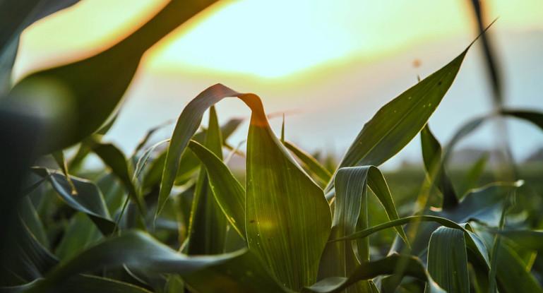lightNgrass.jpg