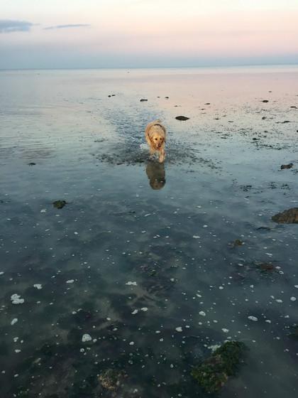 044 - Un chien à la mer!!.jpg