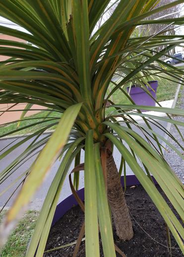 029 - Petit palmier à croquer.jpg