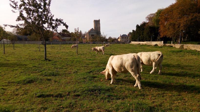 038 - Les vaches.jpg