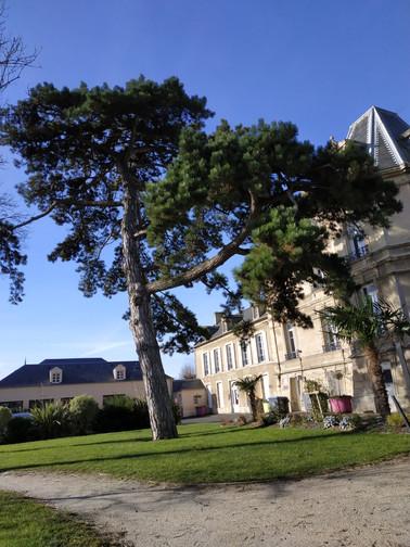 026 - L'arbre et la mairie.jpg