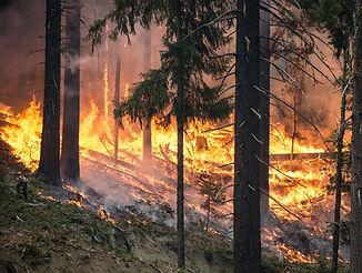 forest-fire-2268725.jpg