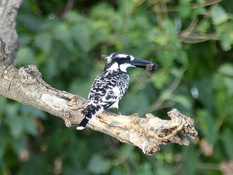 Faszinierende Vogelwelt mit bekannten Arten und einzigarten Spezies