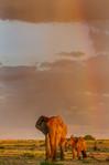 Elefanten in Etosha: Ute von Ludwiger