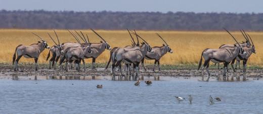 Oryx: Ute von Ludwiger