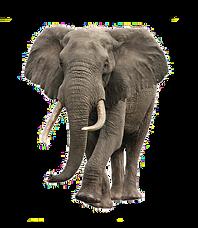 elefant trans.png