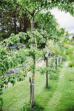 BurgHotelBären_Garten_088.jpg