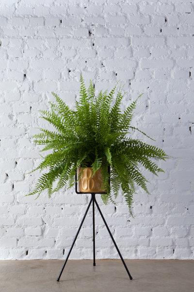 pé de planta Nº5 + vaso 21 cm