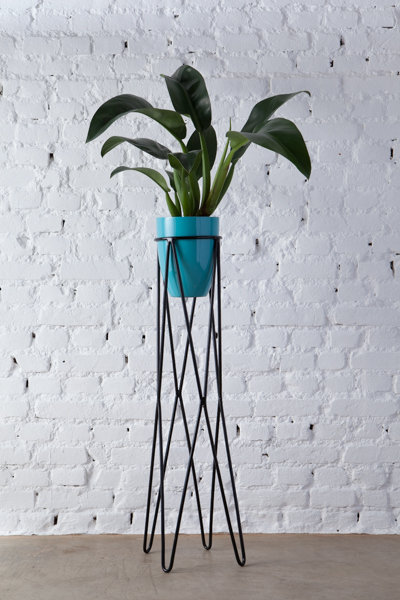 pé de planta Nº3 + vaso 19 cm