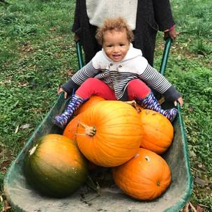 Phoebe pumpkin.jpg