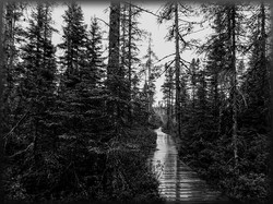 Wet Trail in Paul Smith's