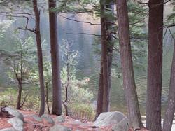 Trees at Cascade