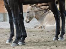 hooves_donkey.JPG