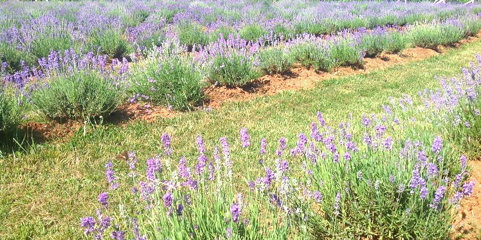 Spring Lavender Wellness Retreat Days