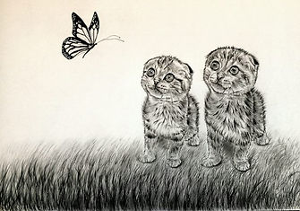 Baby Kittens (Wonder)