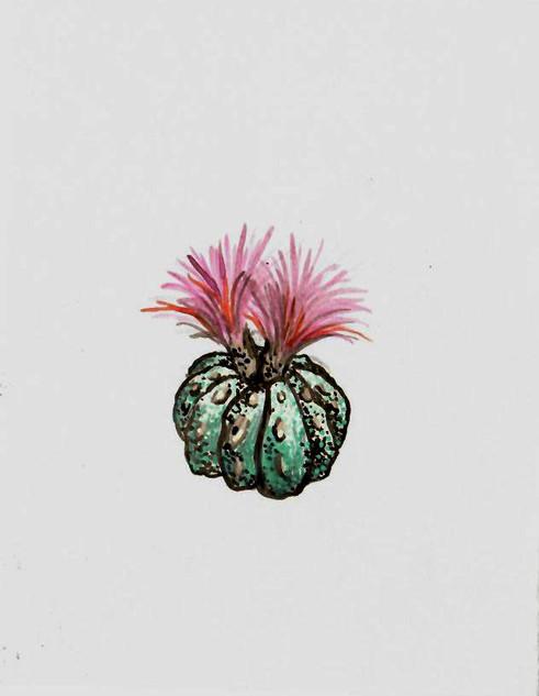 floweringcactus.jpg