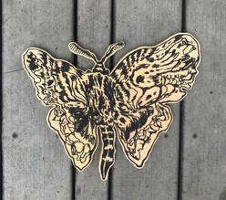moth_fix.jpg