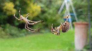 professional_spider_spraying_service.jpg