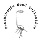 Seed Collective