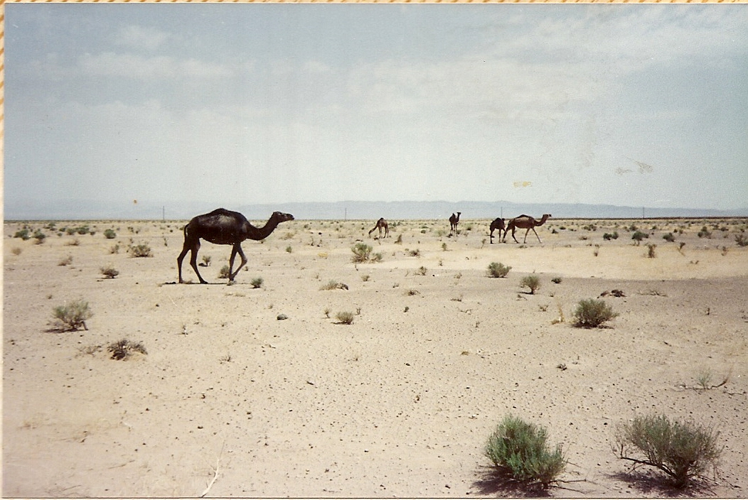 Algeria 1988 (21).jpg