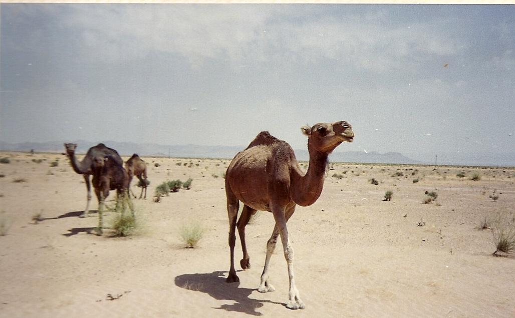 Algeria 1988 (22).jpg