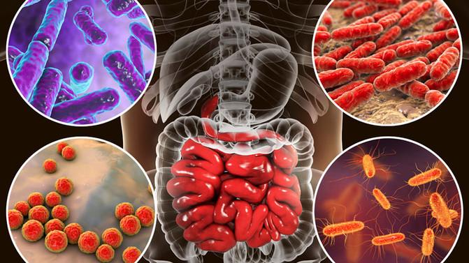 Microbiota e inmunidad