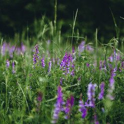 selective-focus-photo-of-lavenders-23457