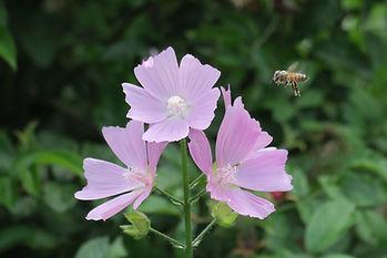 jardin abeille.jpg