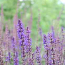 fleurs jardin.jpg
