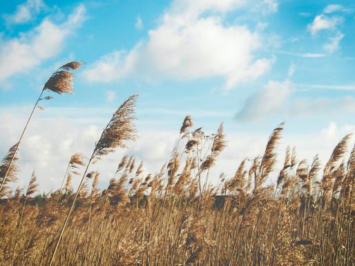 Pourquoi les matériaux biosourcés ont-ils le vent en poupe ?