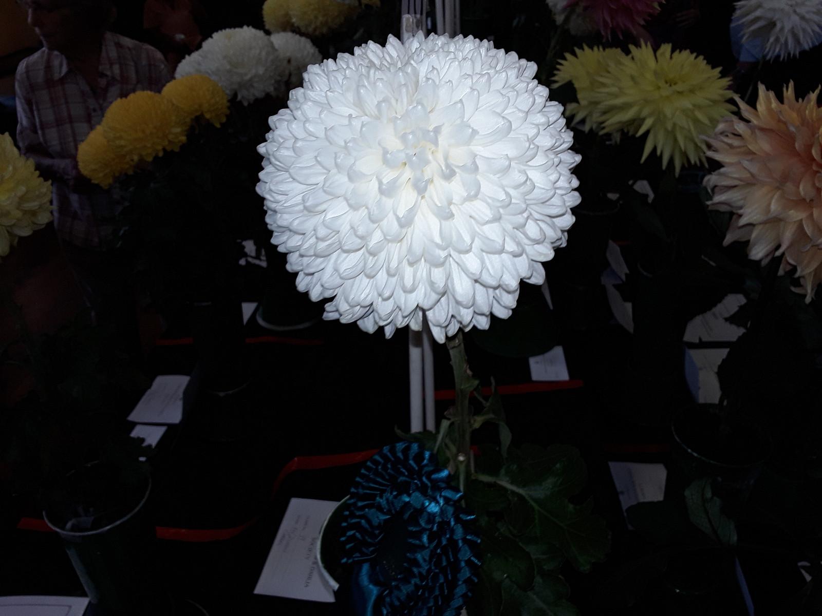 Home Surrey Chrysanthemum Amp Dahlia Society