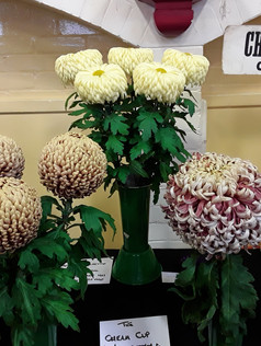 2019 Late Chrysanthemum Show - Championship D winning exhibit
