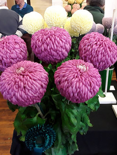 2019 Late Chrysanthemum Show - Best Exhibit in Open classes
