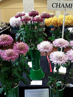 2019 Late Chrysanthemum Show - Championship E Winner